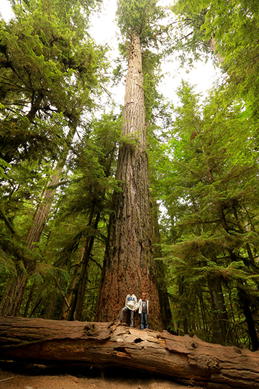 Cathedral Grove IMG_3143