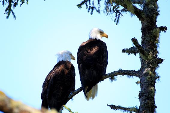 Pacific Rim National Park Reserve  / Schooner Trail IMG_3174