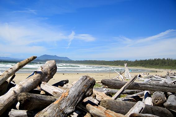 Pacific Rim National Park Reserve  / Schooner Trail IMG_3186