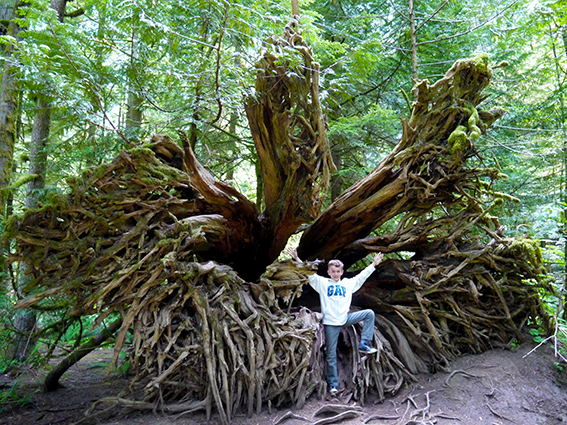 Cathedral Grove P1070320